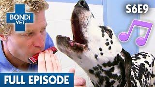 Cute Kittens Have Been Left Alone | FULL EPISODE | S06E09 | Bondi Vet