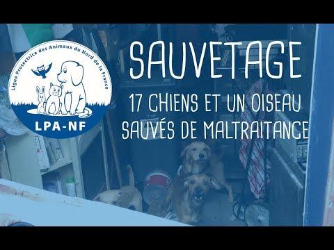 LA LPA-NF SAUVE 17 CHIENS Et 1 OISEAU D'un Logement Insalubre à Roubaix