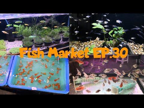 Fi8H TV : Fish Market EP.30