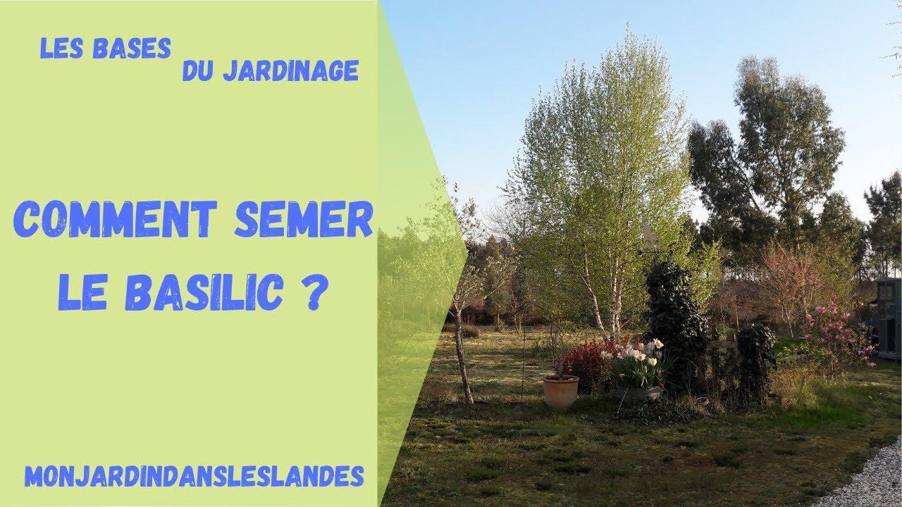 Comment Planter Du Basilic comment semer le basilic - monjardindansleslandes
