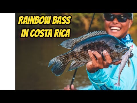 Rainbow Bass Fishing In Costa Rica