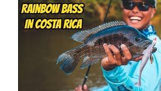 Rainbow Bass Fishing in Costa Rica