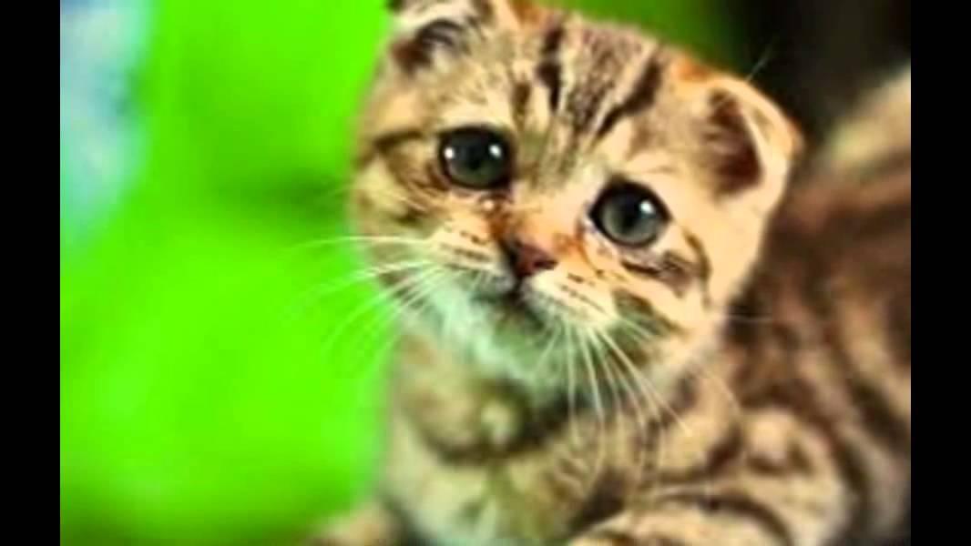 image animaux triste
