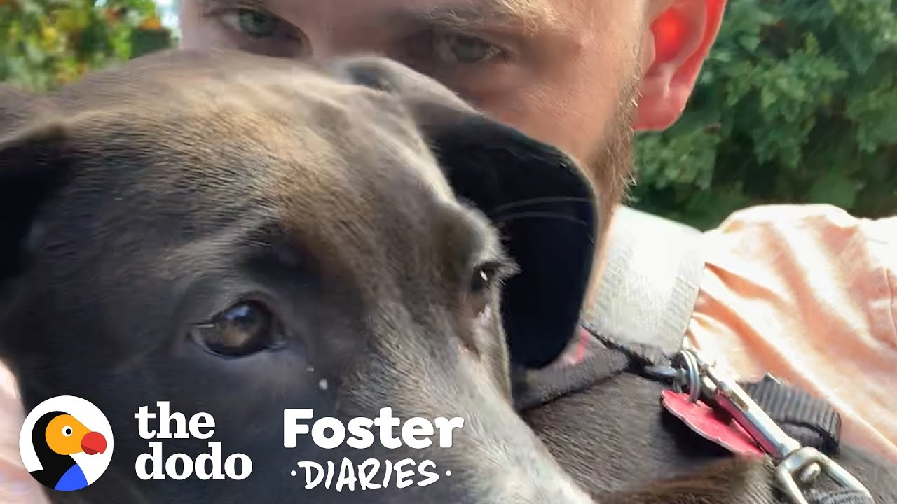 Guy And His Dog Find Their Foster Puppy The Perfect Home | The Dodo Foster Diaries