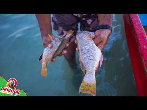 Net Fishing | Parrot Fish Catch And Cook