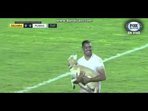 Labrador Retriever Disrupts Soccer Game But Entertains Fans And Players
