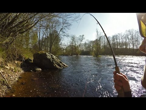 Moments from the Mörrum river 2016. PART 1. Fly fishing salmon & sea trout