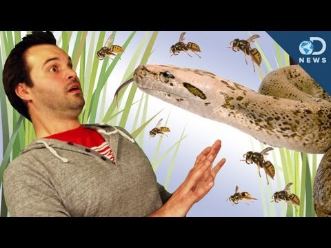 Making Invasive Species Work For Us