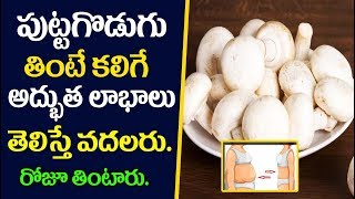 Why Mushroom Good For Men? | Health Benefits of Eating Mushrooms | 7 Amazing Health Benefits