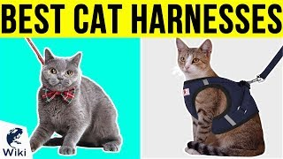 UPDATED RANKING ▻▻ https://wiki.ezvid.com/best-cat-harnesses Disclaimer: These choices may be out of date. You need to go to wiki.ezvid.com to see the ...