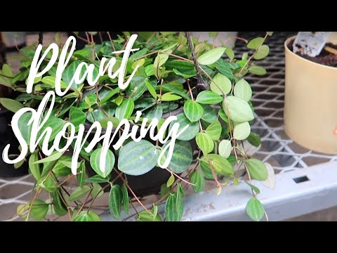 Plant Shopping At The Home Depot | JAN 2020