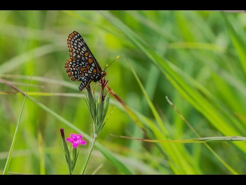 Butterfly Count 2014 - Oakland County, Michigan