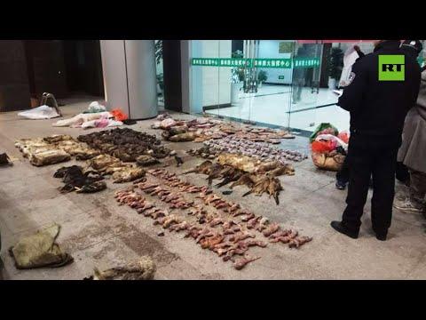 China prohíbe el comercio de vida silvestre en todo el país