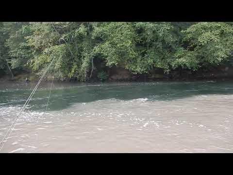 Cowlitz River Coho Sept 2019