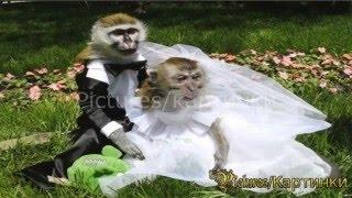 Приколы свадьба животных-Рicture Show