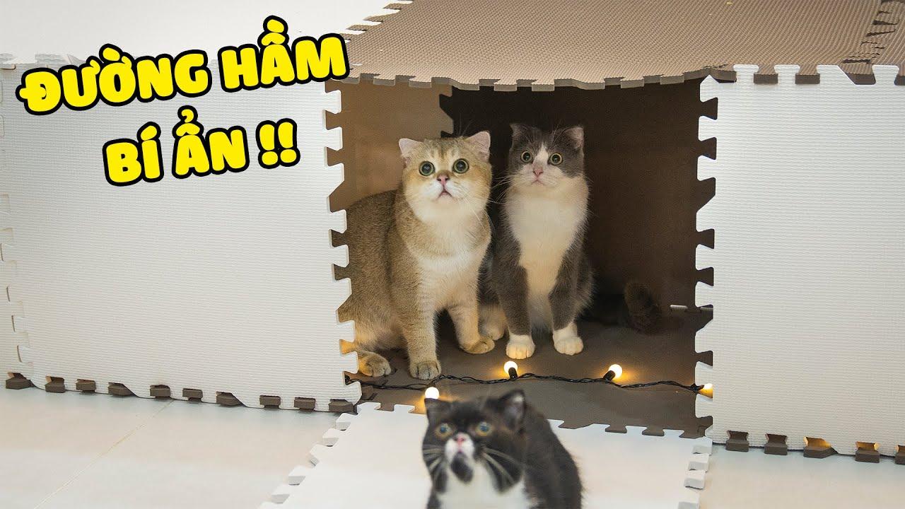 [Hài Hước] Mèo Có Thể Vượt Qua Mê Cung Đường Hầm Bí Ẩn Không???   The Happy Pets #78