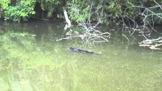 Beaver, C&o Canal, Goergetown, Washington Dc