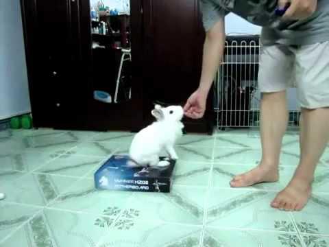Huấn Luyện Thỏ - Training Rabbit.flv