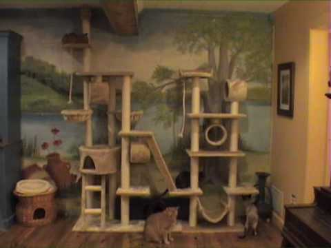 timelapse of cats on big cat tree
