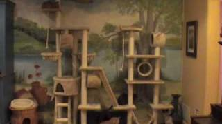 Time-lapse of cats on big cat tree
