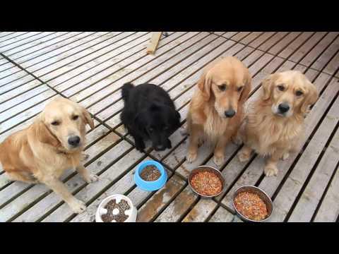 大型犬エリア 食事風景