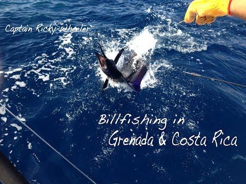 Billfishing Grenada & Costa Rica (Fishy Quicky w/ Captain Ricky Wheeler - January 2014)