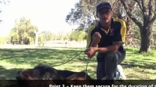 3 Dog Fence Training Guide1