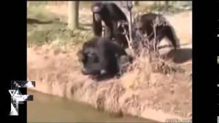 aksi jail hewan lucu banget
