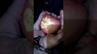 Яблоко из Китая привозили