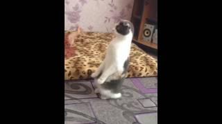 Стоячая бронированная кошка