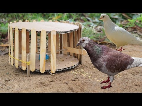 Building Fantastic Bird Trap Make From Popsicle Stick - Technology bird trap