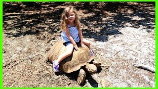 LOOK I'M RIDING A REAL TORTOISE!!!