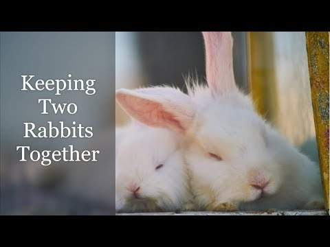 Keeping Two Rabbits Together (A Complete Guide)