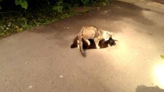 Секс кошки