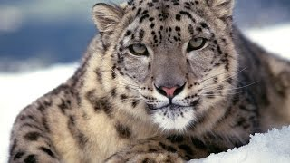 15 самых редких в мире животных