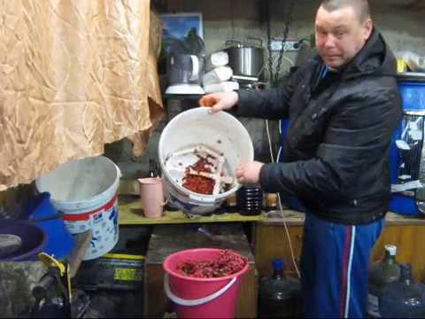 Как поставить брагу на рябине красной