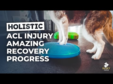Will Tidus Recover From The ACL Injury? -  HUSKY SQUAD Vlog