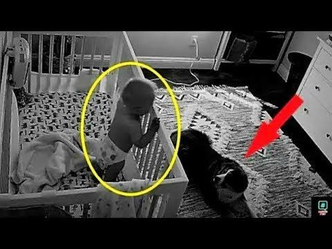 Камера записала, что эта собака делает ночью с ребенком!