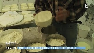 FEUILLETON : Dans les Vosges, le bio en fait tout un fromage