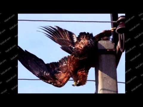 Почему птиц на проводах не убивает током