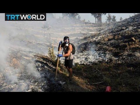 Wildfires cause damage to Turkey's pine honey industry Hasan Abdullah | Money Talks