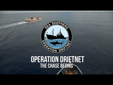Operation Driftnet: The Chase Begins