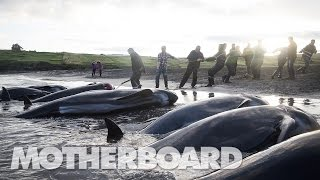 The Grind: Whaling in the Faroe Islands (Full Length)