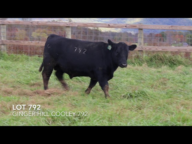 Ginger Hill Angus Lot 792