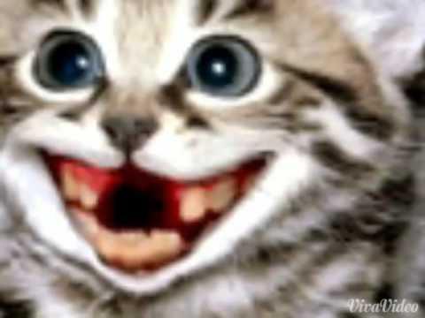 милашки котики картинки