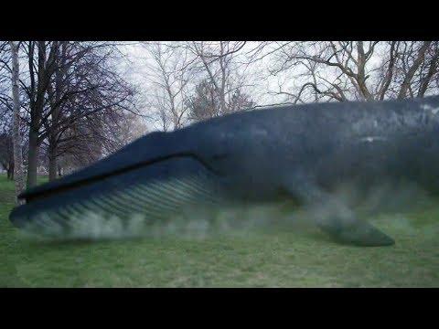 几分钟看搞笑灾难片《鲨卷风4》,充分体验了智商被侮辱的快感