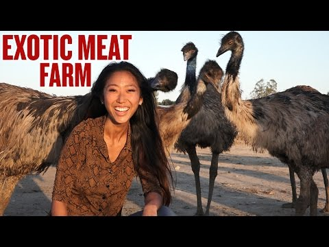 Is Eating Exotic Animals Ok? Watch This Before You Make Up Your Mind