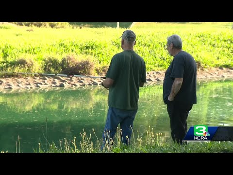 Mazzy - Temporary Ban On Fishing at an Elk Grove lake....