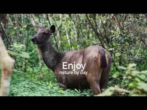 Nam Nern Night Safari in Laos (Short version)