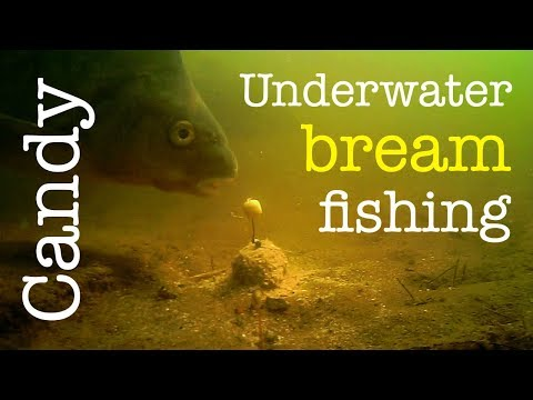 Underwater bream fishing thumbnail